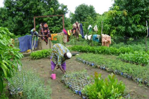 Tree nursery (Burkina Faso ©ADAP)