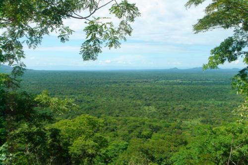 Miombo Landscape (Tanzania ©Yves Hausser)
