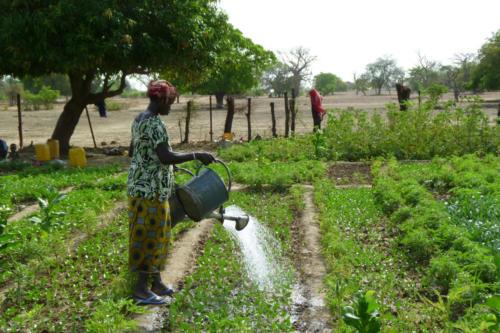 Market gardening (Burkina Faso ©Florian Reinhard)