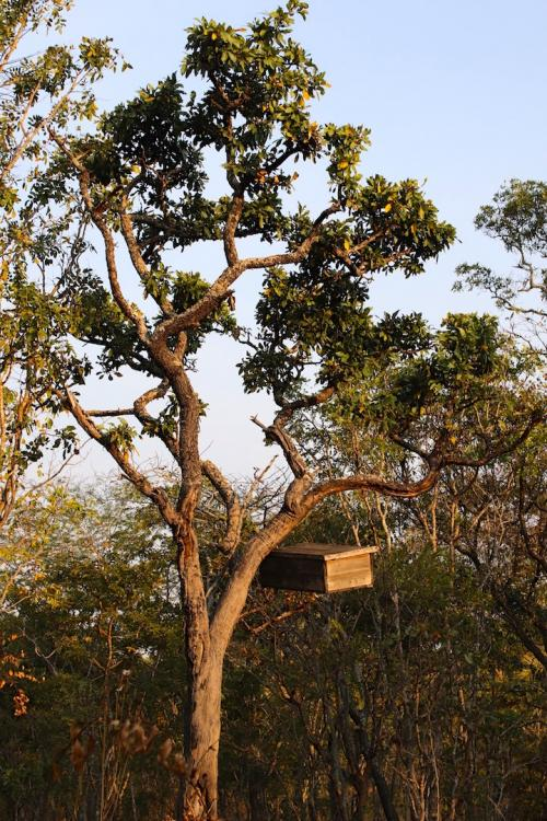 Modern beehive in a tree