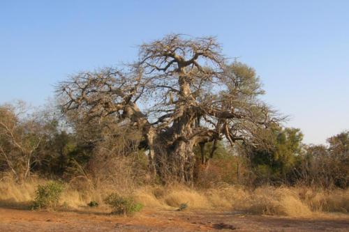 Le Baobab (Burkina Faso ©Sandy Mermod)