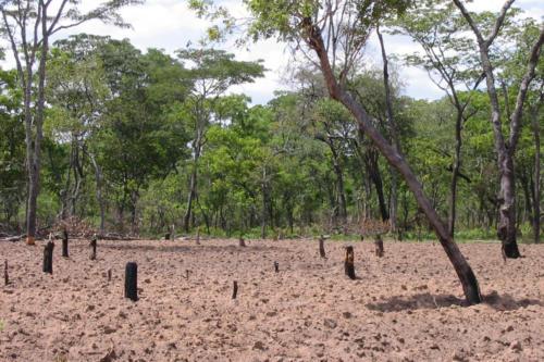 Déforestation (Tanzanie ©Hélène Weber)