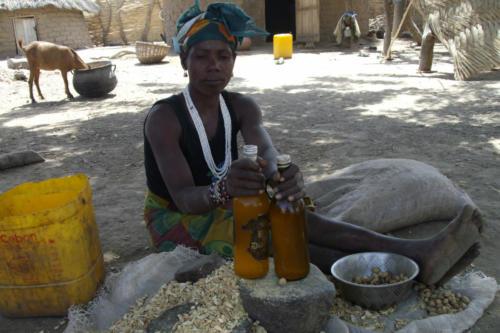 Fabrication d'huile de Balanites (Burkina Faso ©ADAP)
