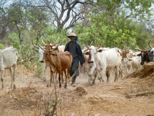 Pastoralisme (Burkina Faso ©Florian Reinhard)