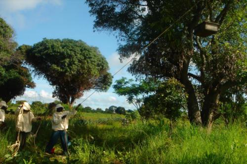 Récolte d'une ruche (Tanzanie ©Sandra Haesler)